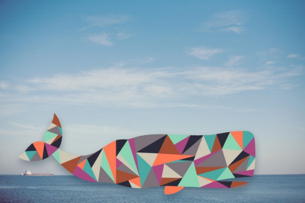 daina lightfoot whale
