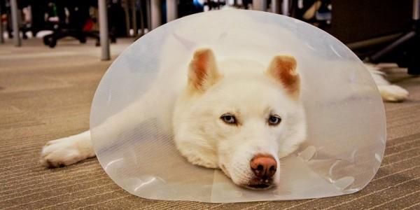 hootdog-link-cone