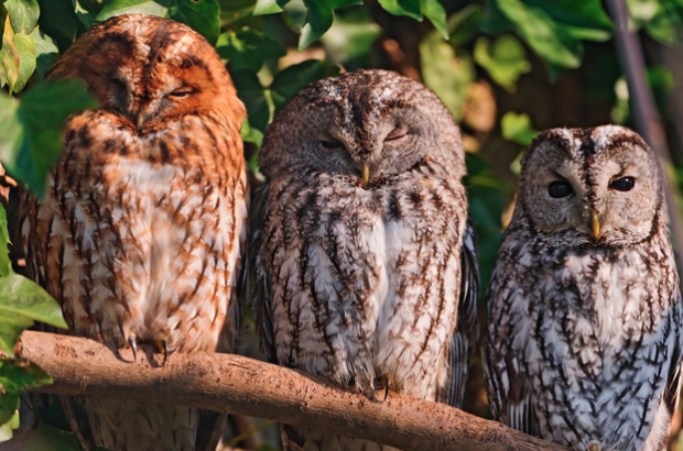 Three isn't a crowd when it comes to your social media's content strategy. Plus, if you're an owl it's called a Parliament.
