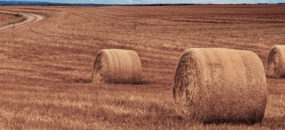 user generated content as represented by hay