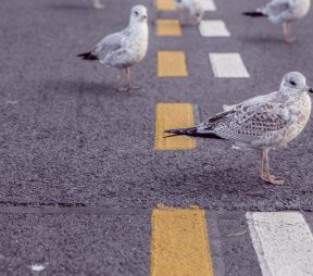 The Dos and Don'ts of Building a Following | Hootsuite Blog