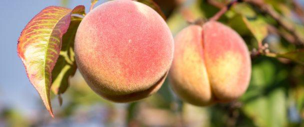 Soziale Netzwerk Peach