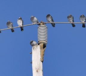 5 Brands on Twitter Who Take Risks (And Why it Works)   Hootsuite Blog
