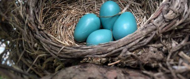 El Marketing de Twitter: La Guía Esencial ES: Cómo Usar Twitter
