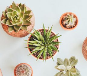 Growth Plays: 3 Start-Ups Share their Social Successes | Hootsuite Blog