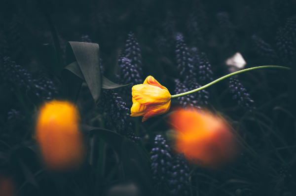 image-copyright-yellow-flowers