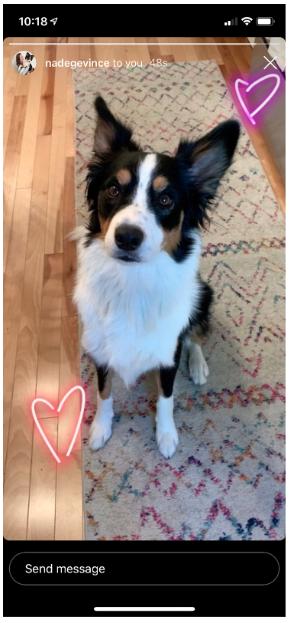 photo d'un chien avec 2 roses entend,