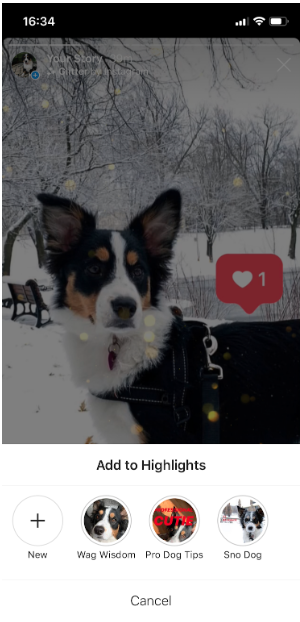 "Instagram story of a dog with a heart symbol above it. Dialog below shows ""Add to highlights"""