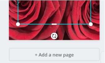 under the highlight cover in the Canva dashboard is a button that says +Add a new page